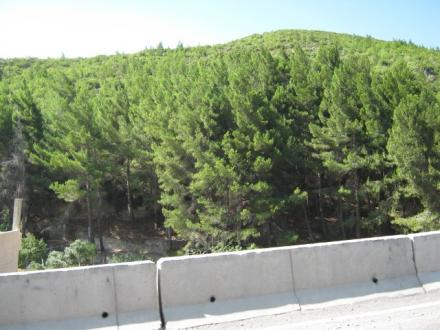 The forestation project is still ongoing in Hama