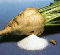 Hama: 1775 tons of sugar extracted out of  34000,449 tons of sugar beet