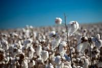 Cotton products are sold according to plan